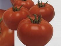 Садин F1 томат детерминант