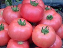ДИМЕРОЗА F1 индетерминант томат
